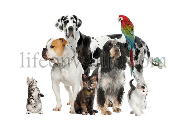 Group of pets standing in front of white background