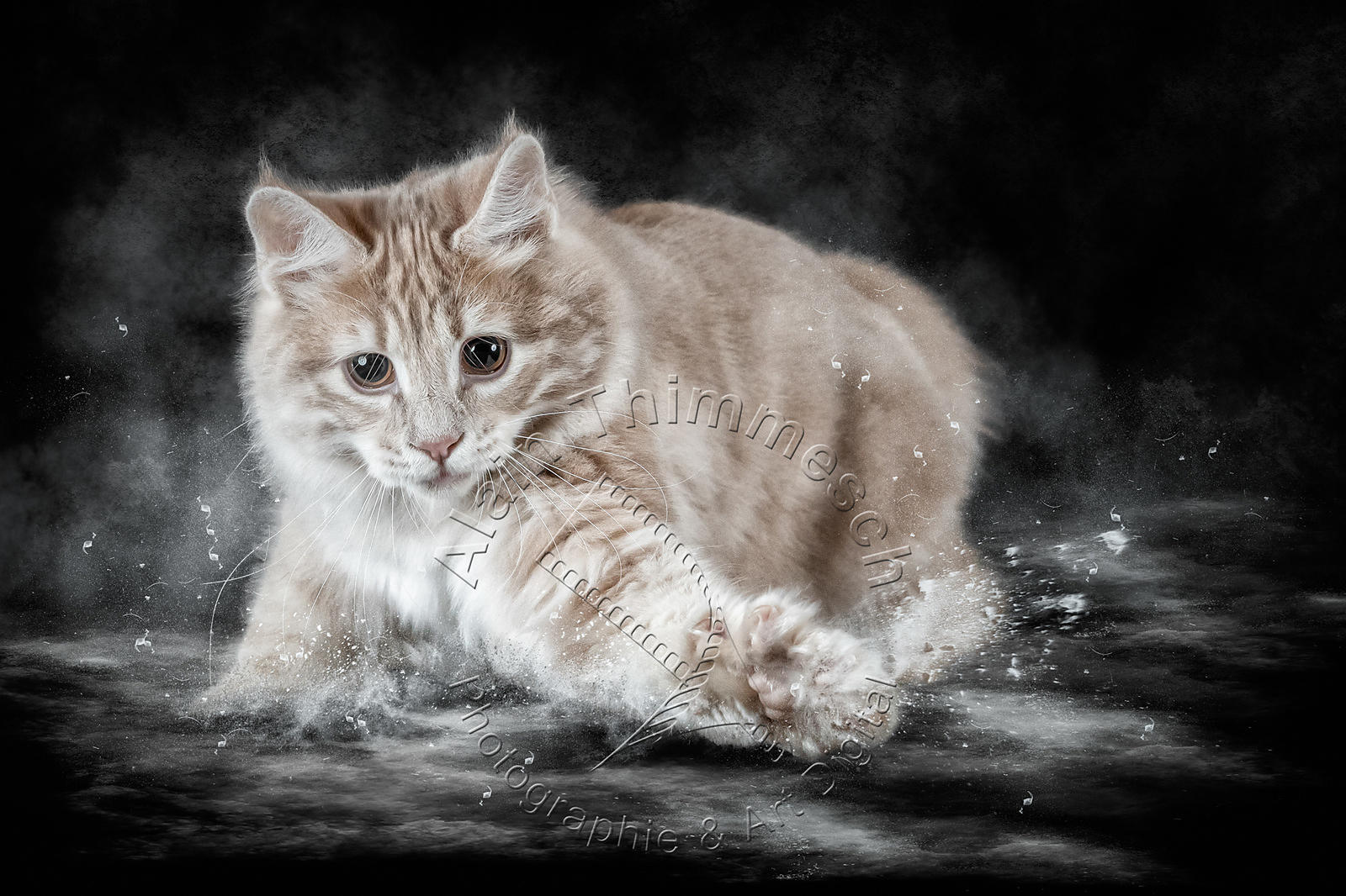 Art-Digital-Alain-Thimmesch-Chat-118