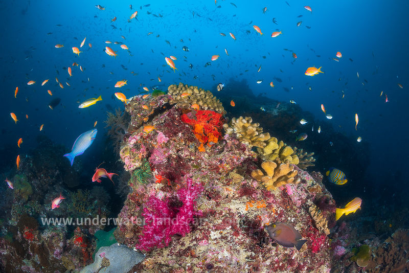Underwater life in the Similan Islands