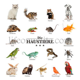 poster of pets in German