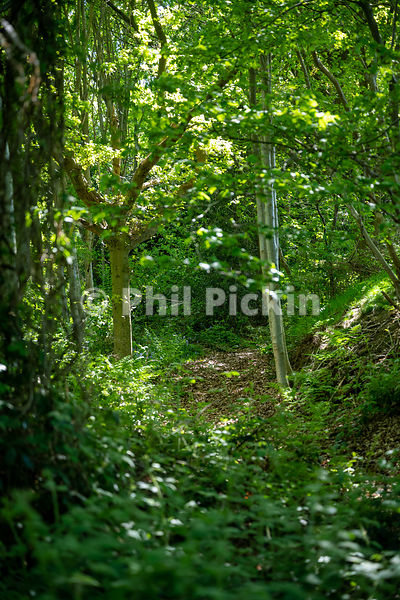 Small path leading up through a wood in the English countryside on a sunny summers day.