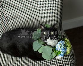 tuxedo cat looks up from checkered chair with fresh flowers as collar