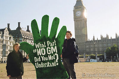 GM activists pledge to rip out GM crops if the government permits commercial planting.