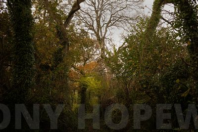 Holloways_and_Tramways-1000500