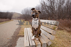 A dog sitting on a bench along the side of a path
