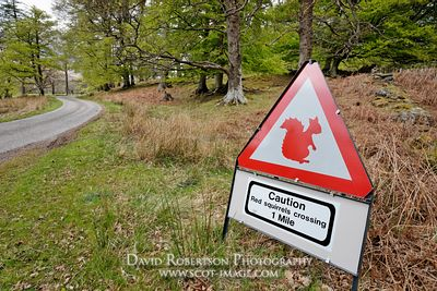 Image - Caution- Red Squirrel crossing road sign
