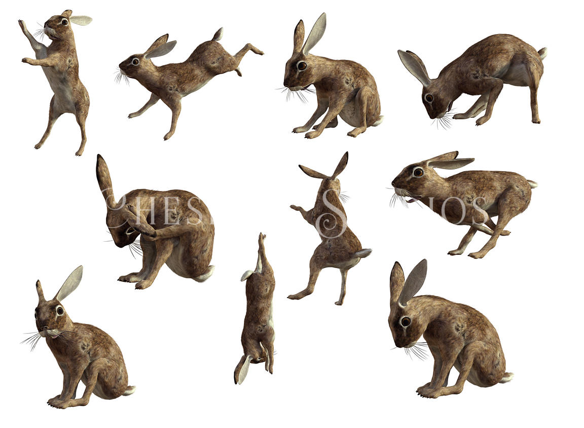 Assorted Hares and Rabbits