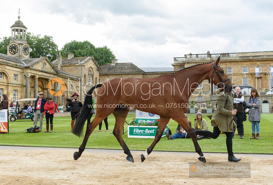 Selina Milnes and IRON IV at the trot up, Equitrek Bramham Horse Trials 2019