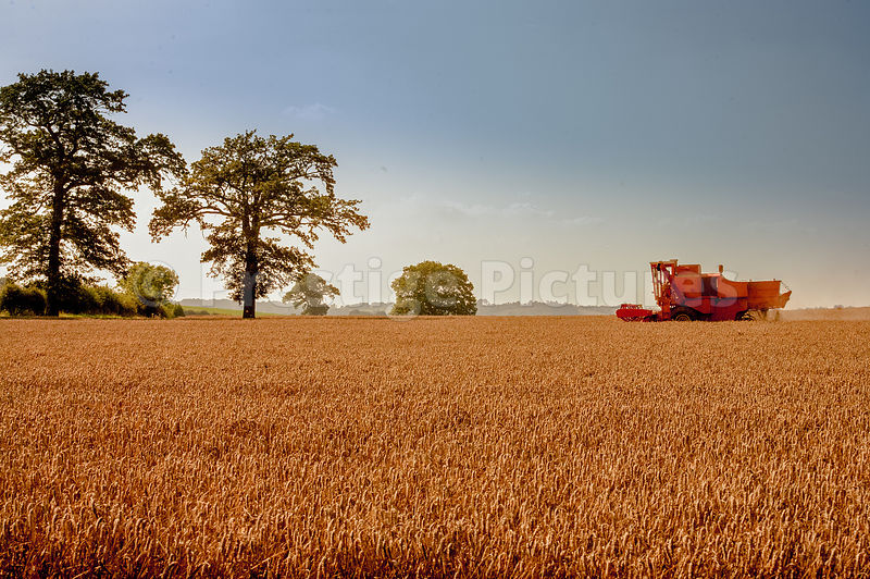 Combine Harvester working in a field in North  Oxfordshire