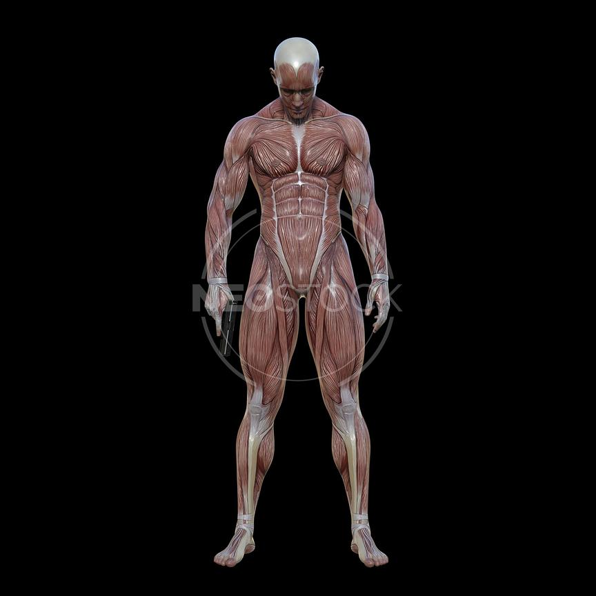 cg-body-pack-male-muscle-map-neostock-15