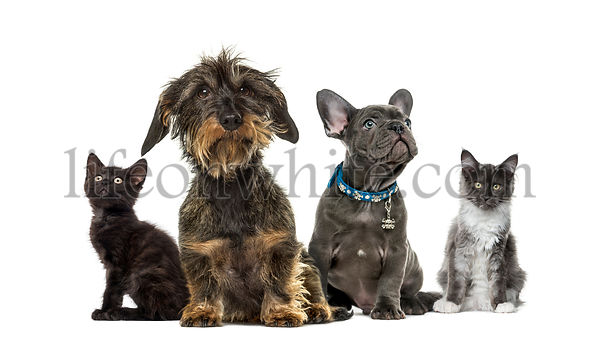 Group of kittens and puppies sitting, isolated on white