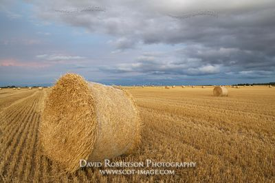 Image - Round bales in stubble field at sunset, near Aberlemno, Angus, Scotland