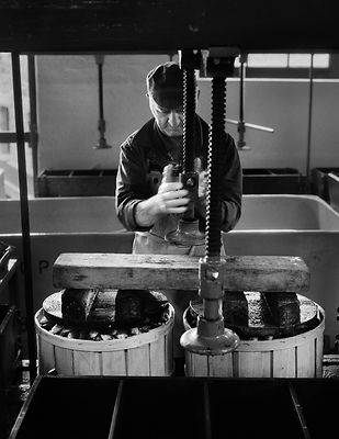 Preserved, salted sardines are pressed into wooden casks. The Pilchard Works, Newlyn, Cornwall, England.