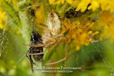 Image - Spider with prey