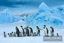 Emperor penguin group with chicks in front of iceberg (lat. aptenodytes forsteri) - Antarctica, Antarctica, Antarctic Peninsu...