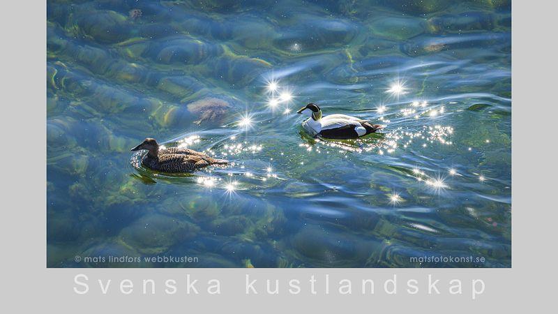 En kalenderbild från Svenska kustlandskap