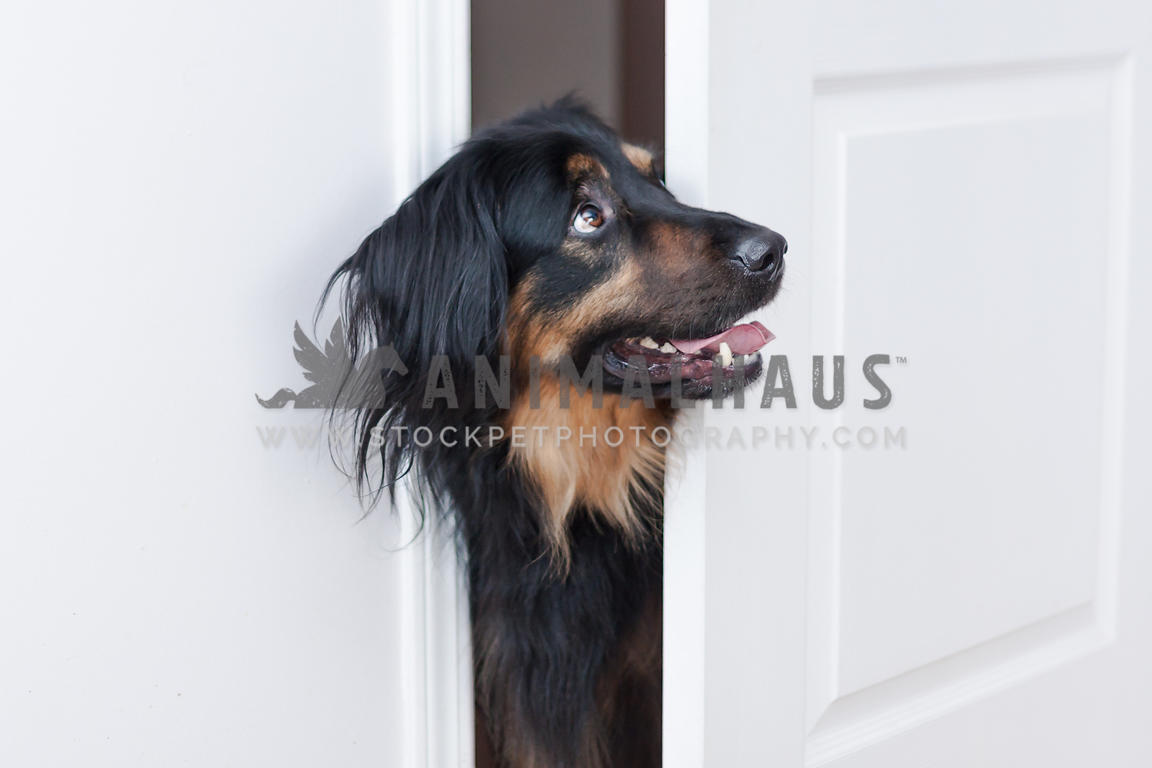 dog asking for permision to enter the room