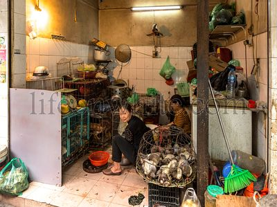 Hanoi, Vietnam, December 30, 2019 - back shop of a retaurant. A lady washes the dishes. She is surrounded by a cage full of l...
