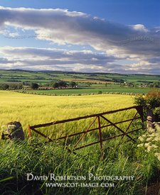 Image - Barley field and old metal gate, Perthshire