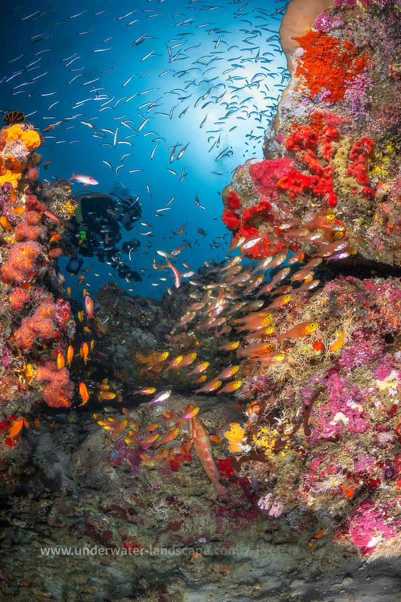 Similan underwater reefscape