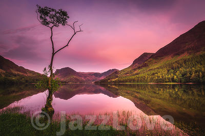 The lone tree on Buttermere lakeshore.