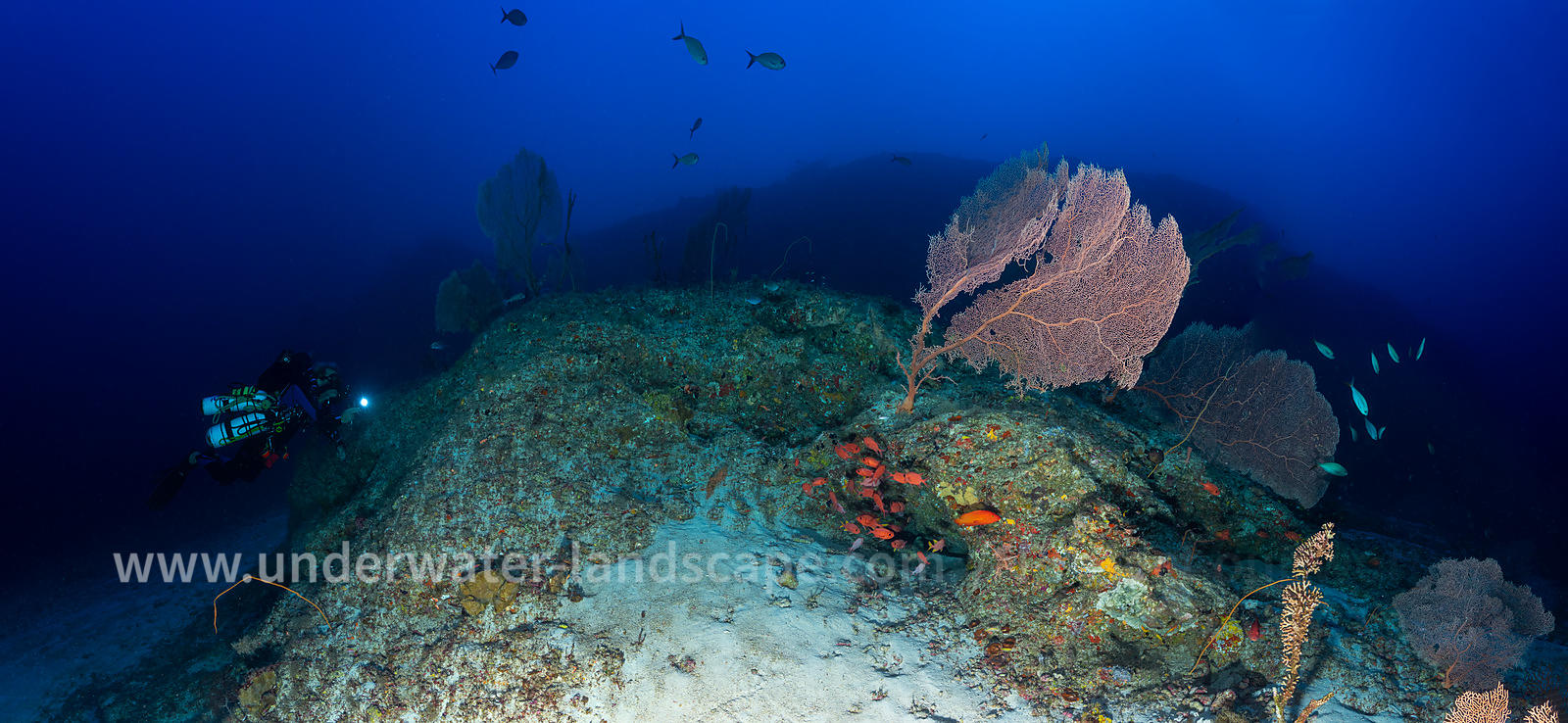 Panoramic view at 80 meters deep