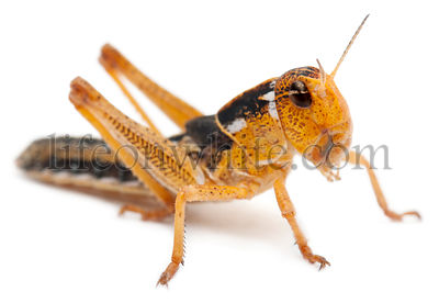 Asian Cricket