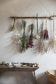 Dried flowers by Gabler