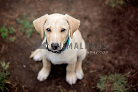 A mixed breed puppy sitting in the dirt