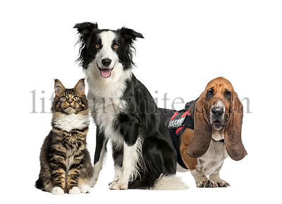 Cat and dogs, isolated on white