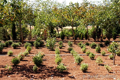 070911-21_Majella_127 Tree nursery about 3 km west of Castelnuovo in the Abruzzo region of Italy.