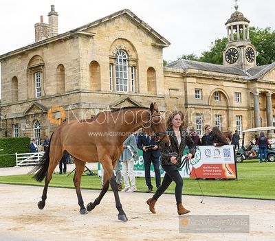 India Wishart and THE MASTERS HARRY at the trot up, Equitrek Bramham Horse Trials 2019