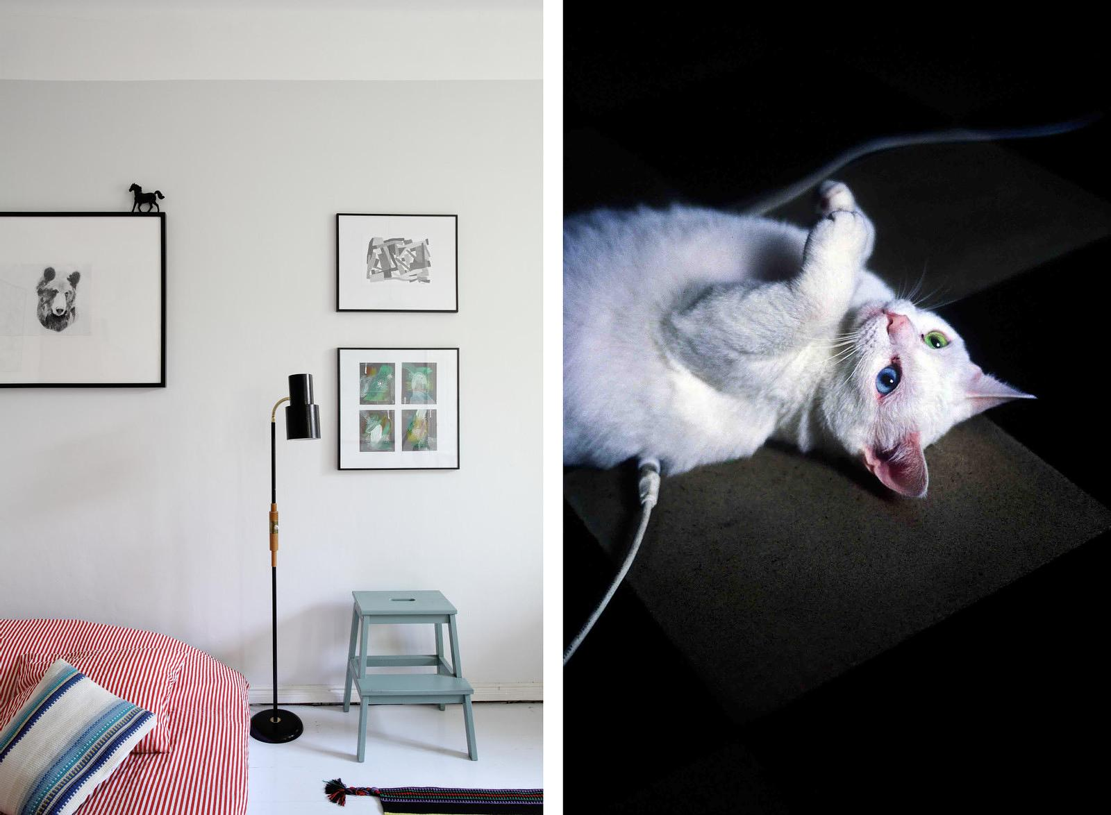 Home of Finnish designer Hanna Anonen - A domestic cat in Turin, Italy