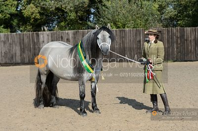 Leyhills M&M In Hand Winter Final - NPS Autumn Festival