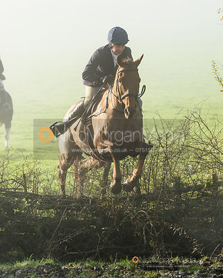jumping a hedge at Withcote - The Cottesmore Hunt at Withcote 30/11