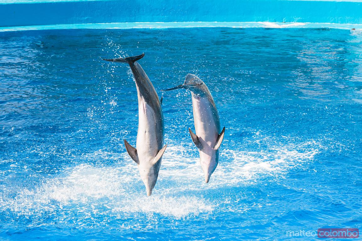 Dolphins at the Oceanographic, Valencia, Spain