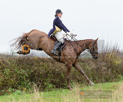 Beanie Sturgis jumping a hedge at Sheepwash - The Belvoir Hunt at Hose 27/11