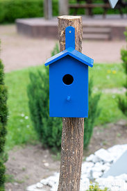Blue nest in a garden ∞Nichoir bleu dans un jardin, France, Moselle, printemps