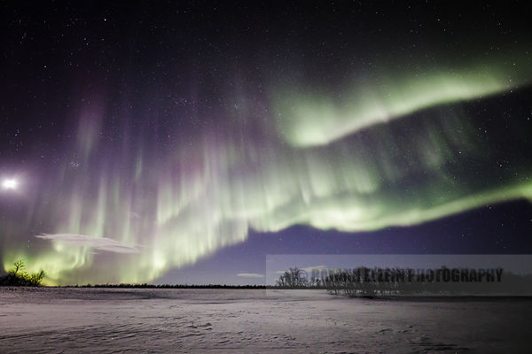 Northern lights and full moon above sparkling snow in northern Finnish Lapland