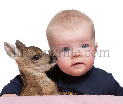 Portrait of baby boy with Fallow Deer Fawn, studio shot