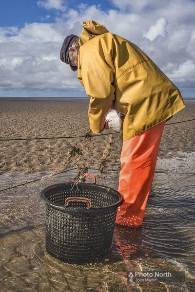 FLOOKBURGH 52B - Gill-net fishing Morecambe Bay