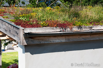 Green roof with sedum and other plants near Abergavenny, Wales.