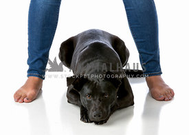 Girl in jeans and barefoot with black dog on white background