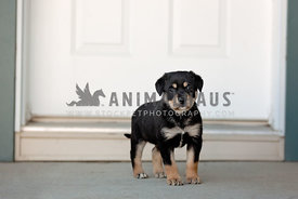 A small puppy standing in front of the front door