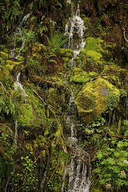 A rich pallet of a mossy green landscape with small seepage at Mill Creek , North california