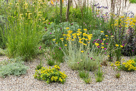 The Drought Tolerant Garden at the RHS Hampton Court Palace Garden Festival 2019. Designers: David Ward and Beth Chatto. Plan...