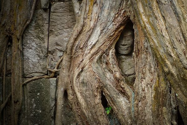 Ta Prohm, Angkor Wat Archaeological Site, Cambodia, Siem Reap, South-East Asia.
