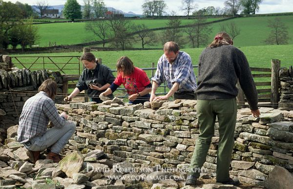 Image - Conservation volunteers, dry stone walling, dyking