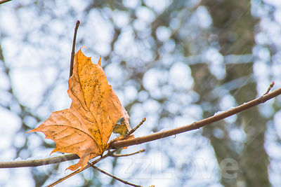 The last leaf on tree.