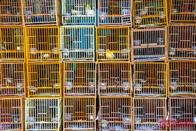 Bird cages, Hong Kong, China